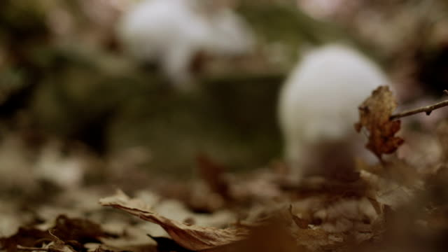 White Bunnies in Forest Pack Three. video