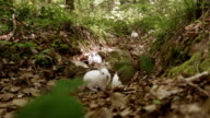 White Bunnies in forest video