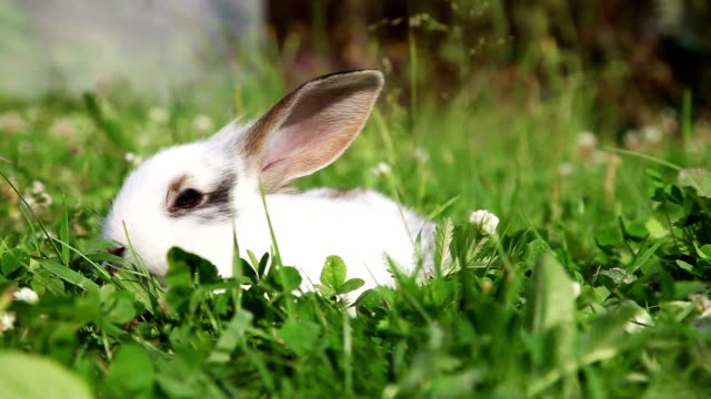 White bunny in a grass video