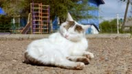 white cat on the road pure wool slow motion video video
