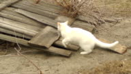 white cat playing in the background of the fence video