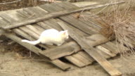 white cat playing on the background fence wooden video