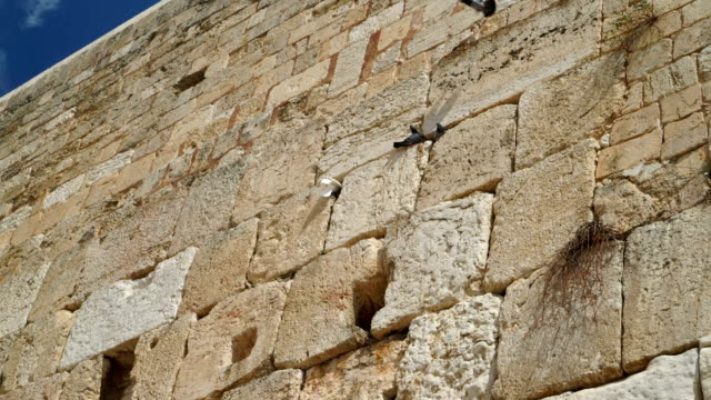 White Dove at Western Wall video