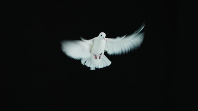 White Dove video