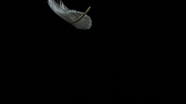 White Feather Falling against Black Background, Normandy, Slow Motion 4K video