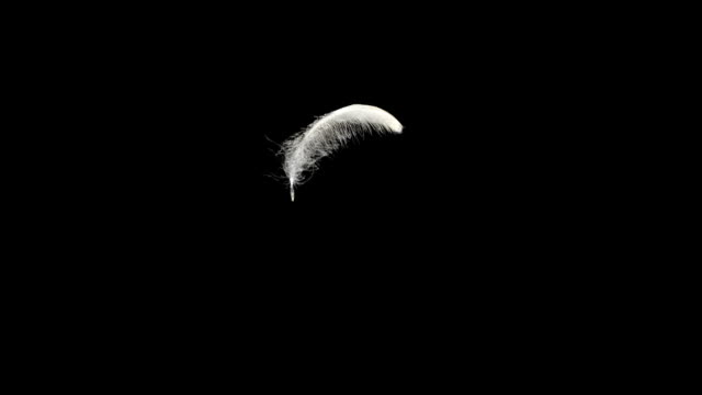 White feather on the black video
