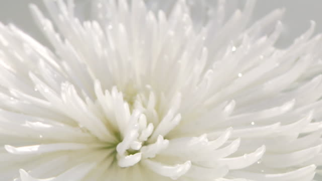 White Flower video