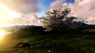 White Flowered Cherry Tree near ocean video