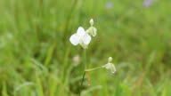 White flowers video