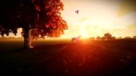 White horse and tree of life at sunrise, tilt video
