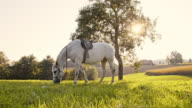 White horse grazing on pasture video