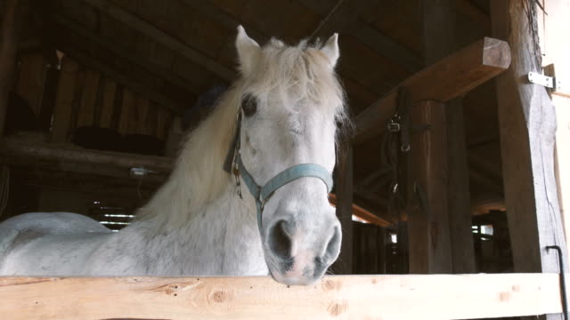 White Horse in the Wood Stable in a Ranch Farm video