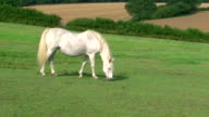 White horse on land video