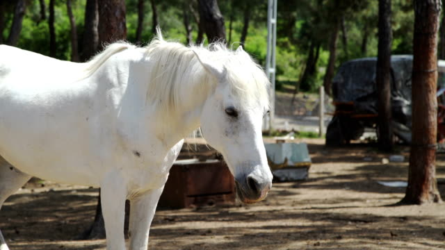 White Horse standing against forest video