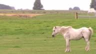 White horse standing on grasslands video