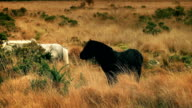 White Horse Walks Past Black Horse Eating video
