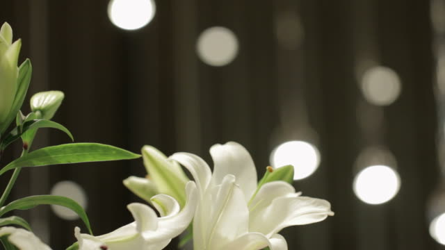 White Lilies in a Vase video