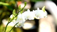 White orchid video