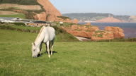 White pony Ladram Bay coast Devon England UK Jurassic Coast video