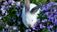 White rabbit and lilac flowers. video