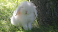 white rabbit at outdoors video video