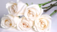 White Roses Falling In Slow Motion video