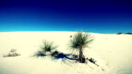 white sands desert new mexico video