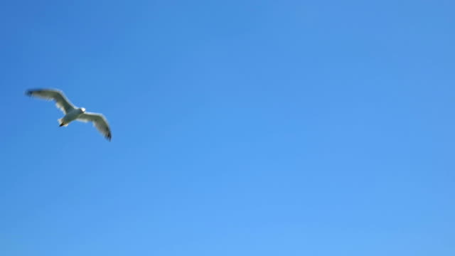 White Seagull in Blue Sky video
