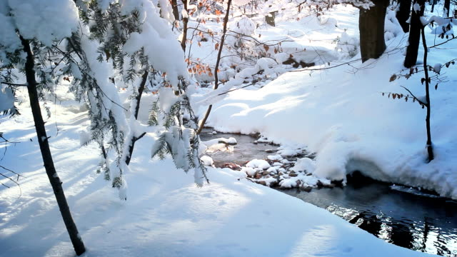 White snowdrifts in the forest, beautiful winter. video