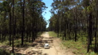 AERIAL: White SUV car driving along dirty road leading through vast lush forest video