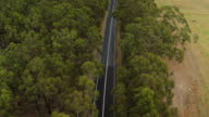 AERIAL: White SUV car driving along straight road surrounded by eucalyptus trees video