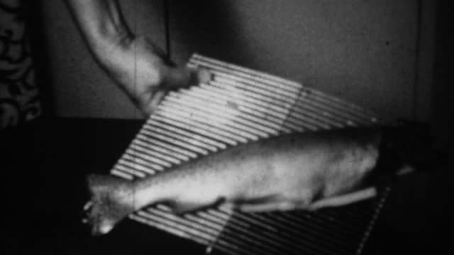 1939: Whole salmon fish fillet on oven cooking grilling rack. video