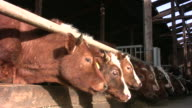 Wholefood organic Farm  'Gazing Threesome' HD video
