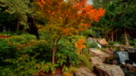 Wide angle pan showing exquisite details of lush Japanese gardens including a waterfall during early autumn video