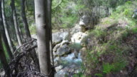 Wide Angle View of River in a forest with Hikers video