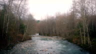 Wide River In Afternoon Woods video