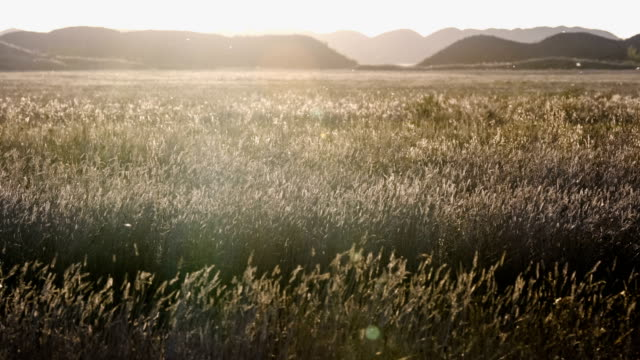 Wide shot of summer steppe with hills in the background and many flying insects in the air at dawn. Turgai gate. Turgai save. Kazakhstan. video