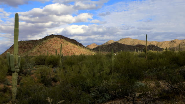 Wide view in Tucson Mountain Park video