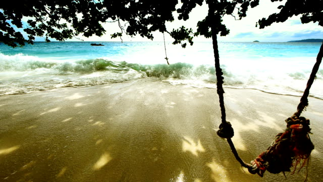 Wild beach video