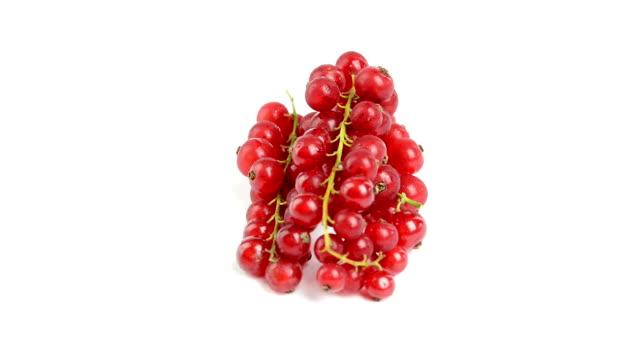 wild berries i on white background video