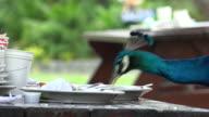 Wild Bird Eating Food video