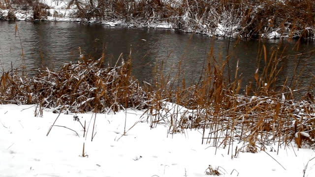wild ducks swim in the winter pond video