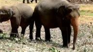 wild elephant in jungle video