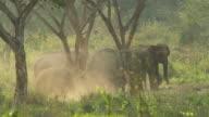 Wild Elephant video