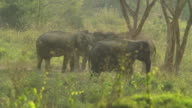 Wild elephants documentary ,HD video