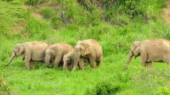 Wild Elephants video