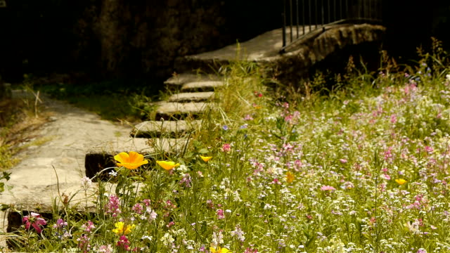 Wild flowers at an old village, France video