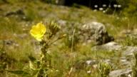Wild flowers at Gardon river, France video