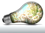 Wild flowers inside light bulb - NTSC video