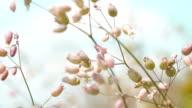 Wild flowers video